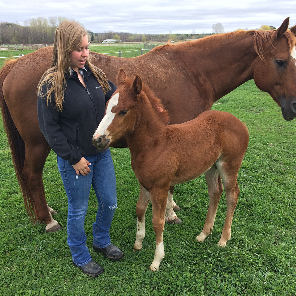 UWRF Senior Janelle Mishler, a student in the Equine Reproductive Techniques course, poses with recently born colt Galaxy and its mother, Phoebe.